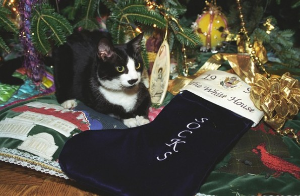 image for Holiday Hazards for your Pets