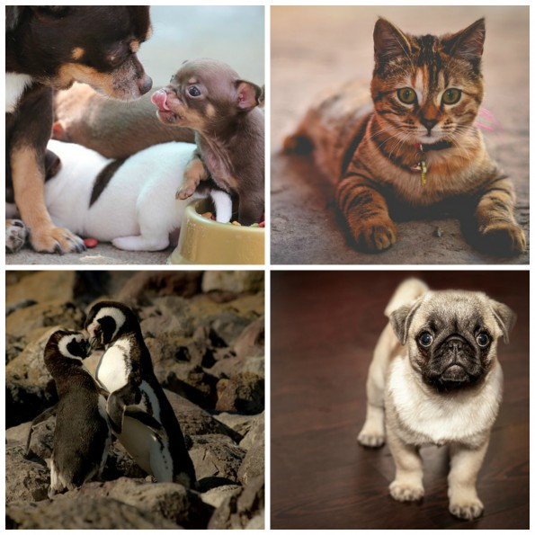 image for Cute Animals to Beat the Blue Monday Blues